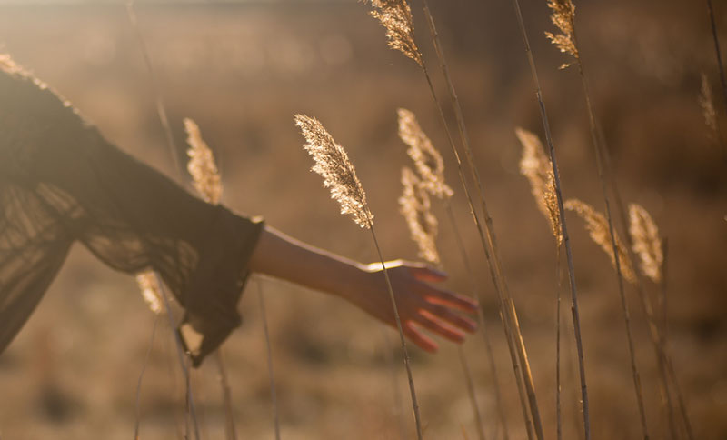 intimind-mindfulness-verano-trigo