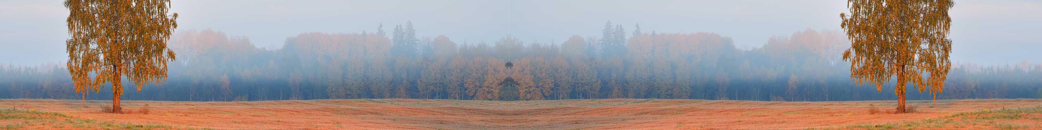 árboles en un páramo