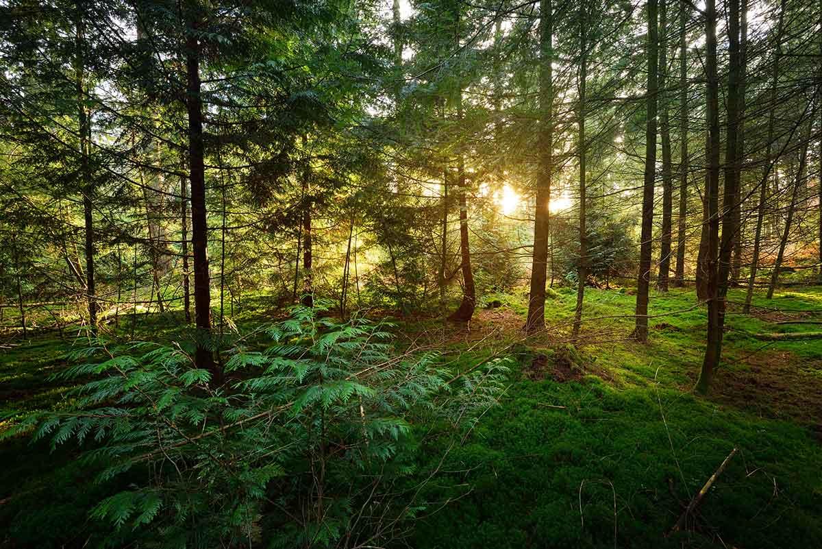 atardecer en el bosque