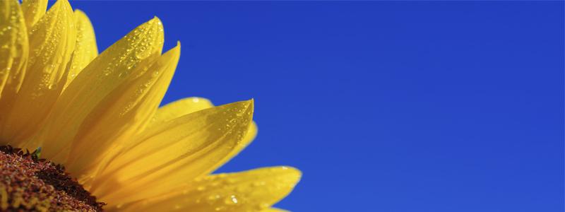 Cultiva la alegría con mindfulness