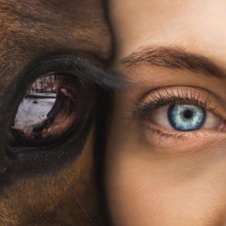 caballo-y-persona